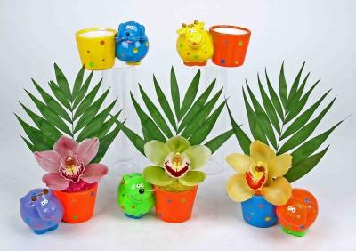 Vrolijk dieren plantertje met 1 orchidee