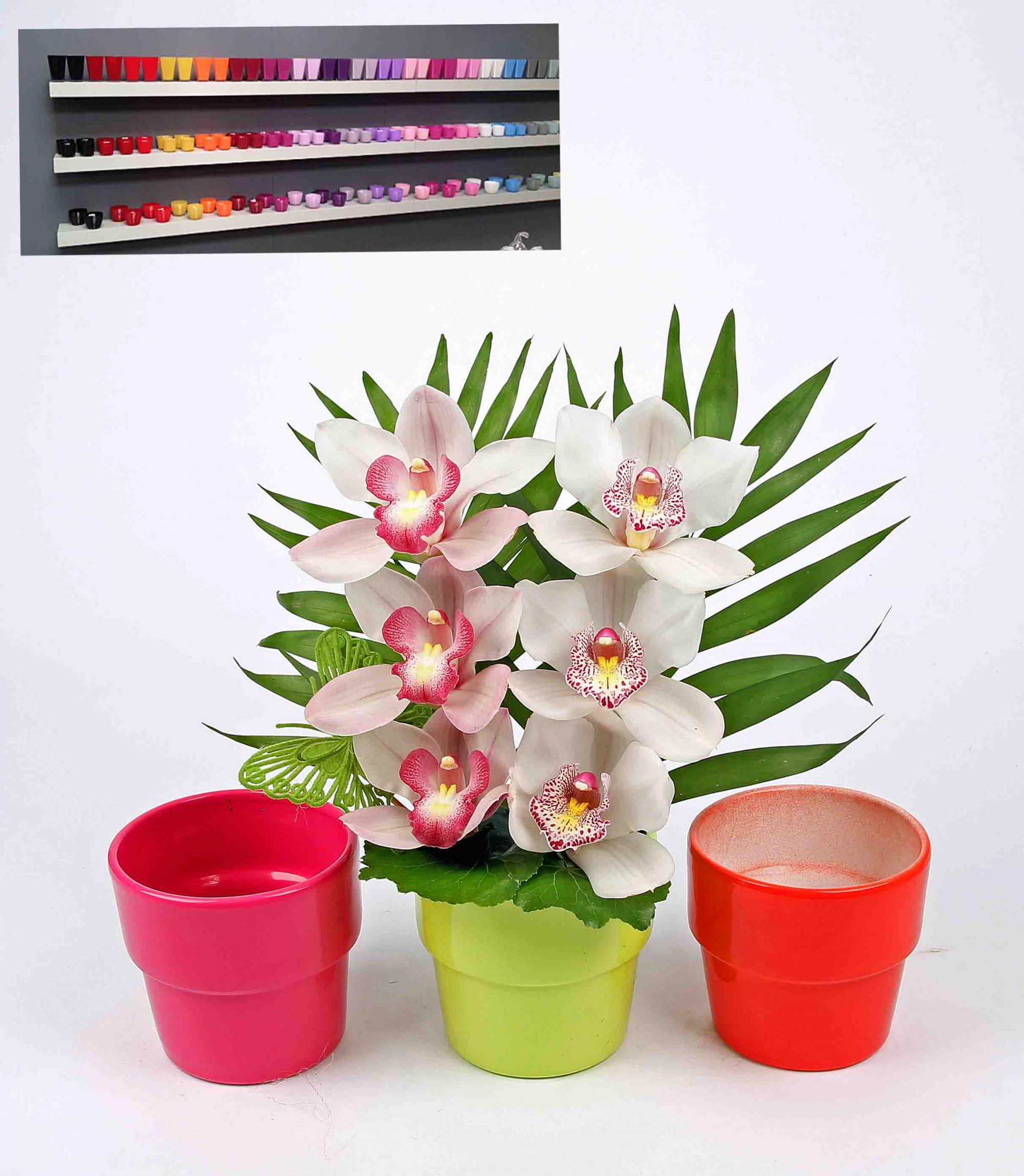 Pastel pot assorti met 6 orchideeën