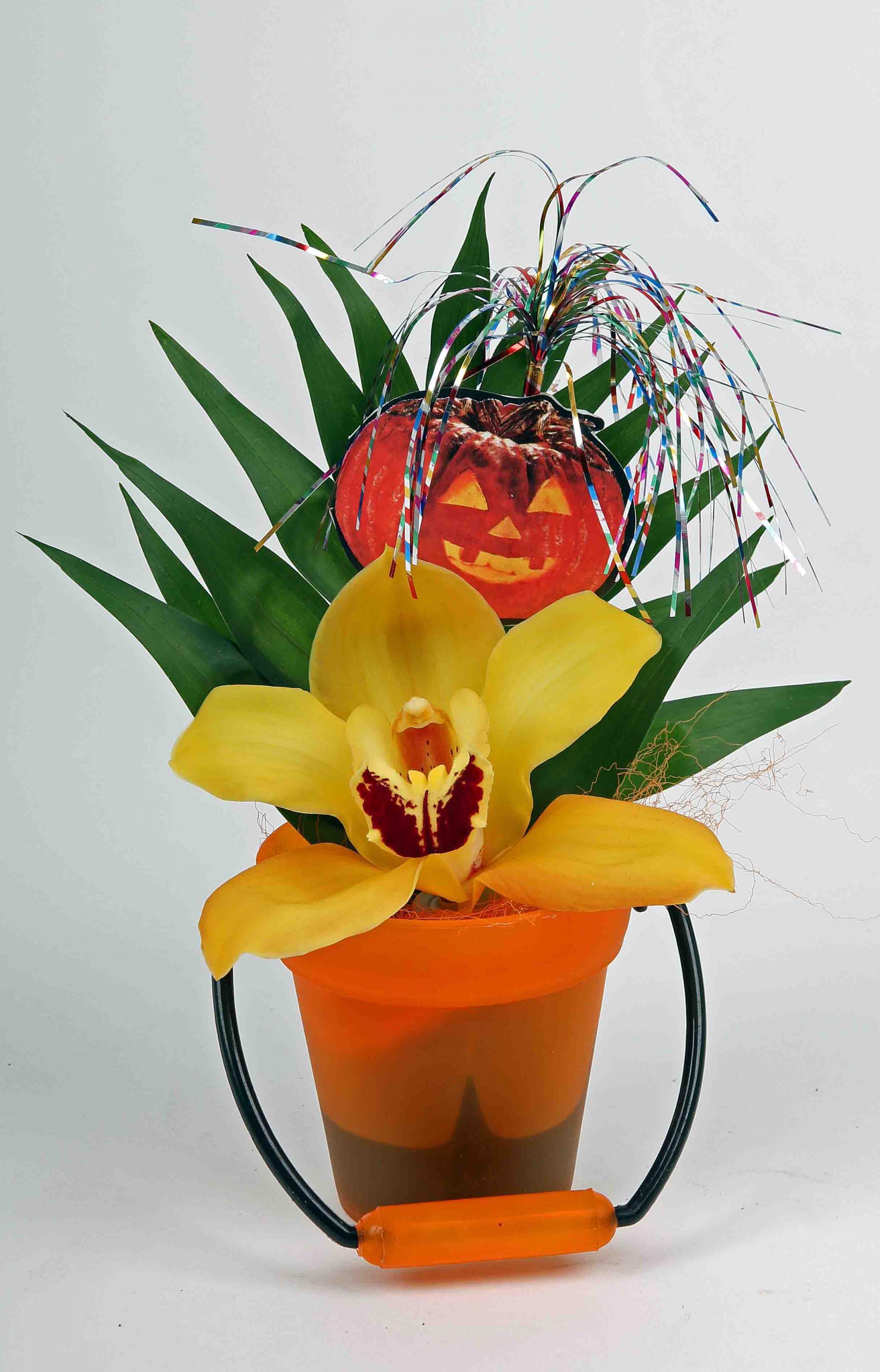 Emmertje met 1 orchidee
