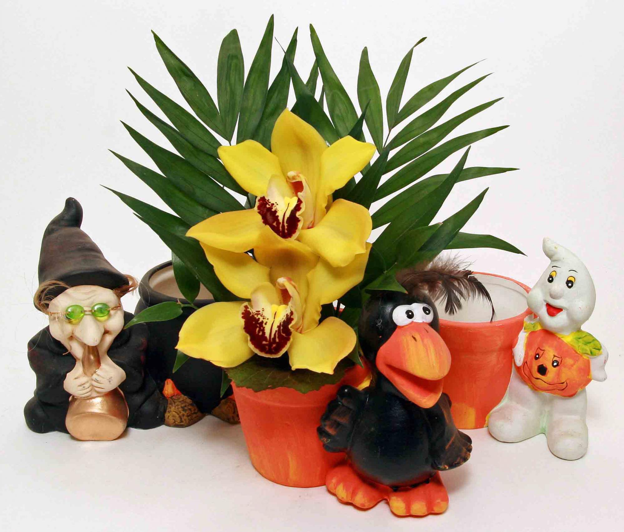 Halloween planter met 2 orchideeën