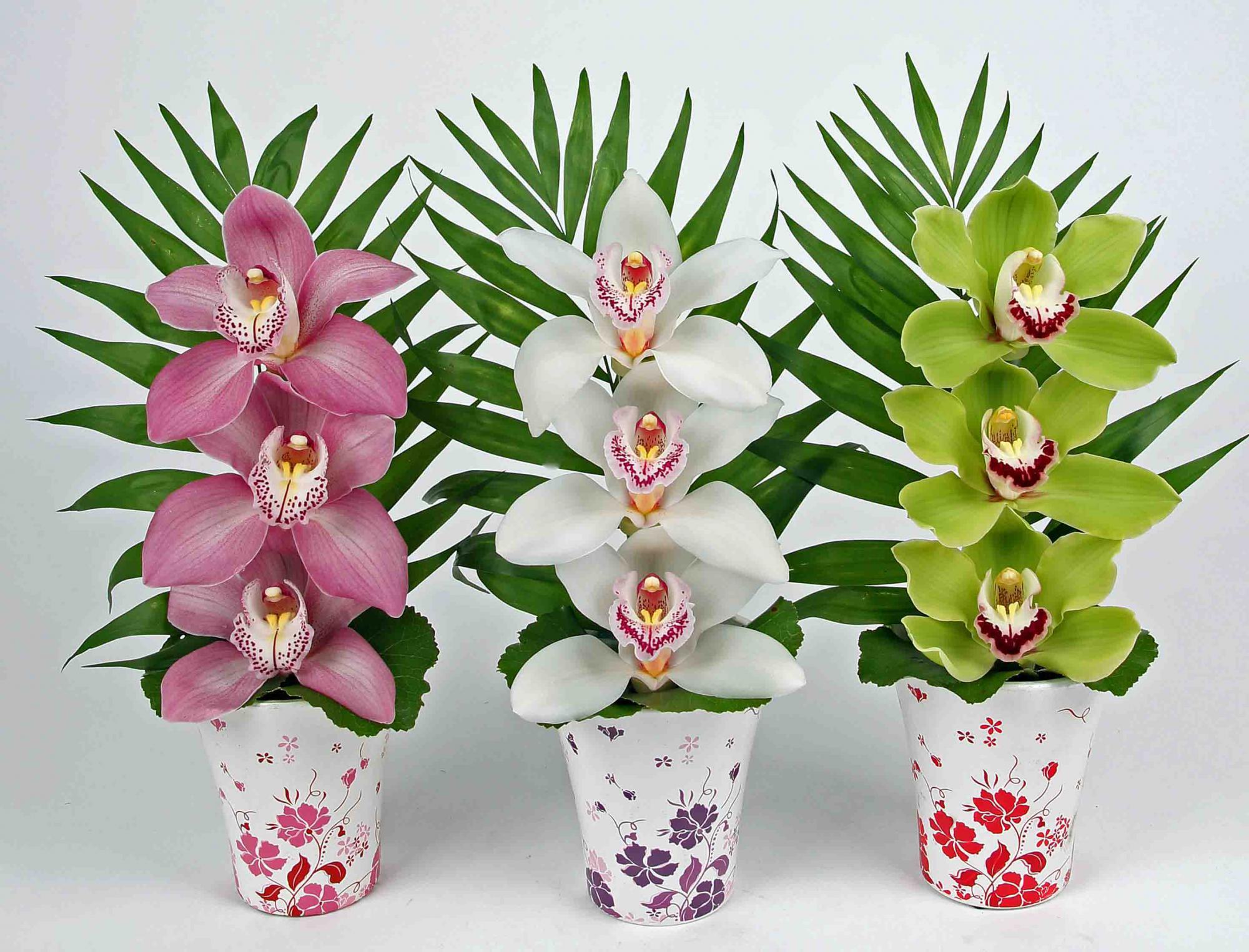 Bloem vaas met 3 orchideeën