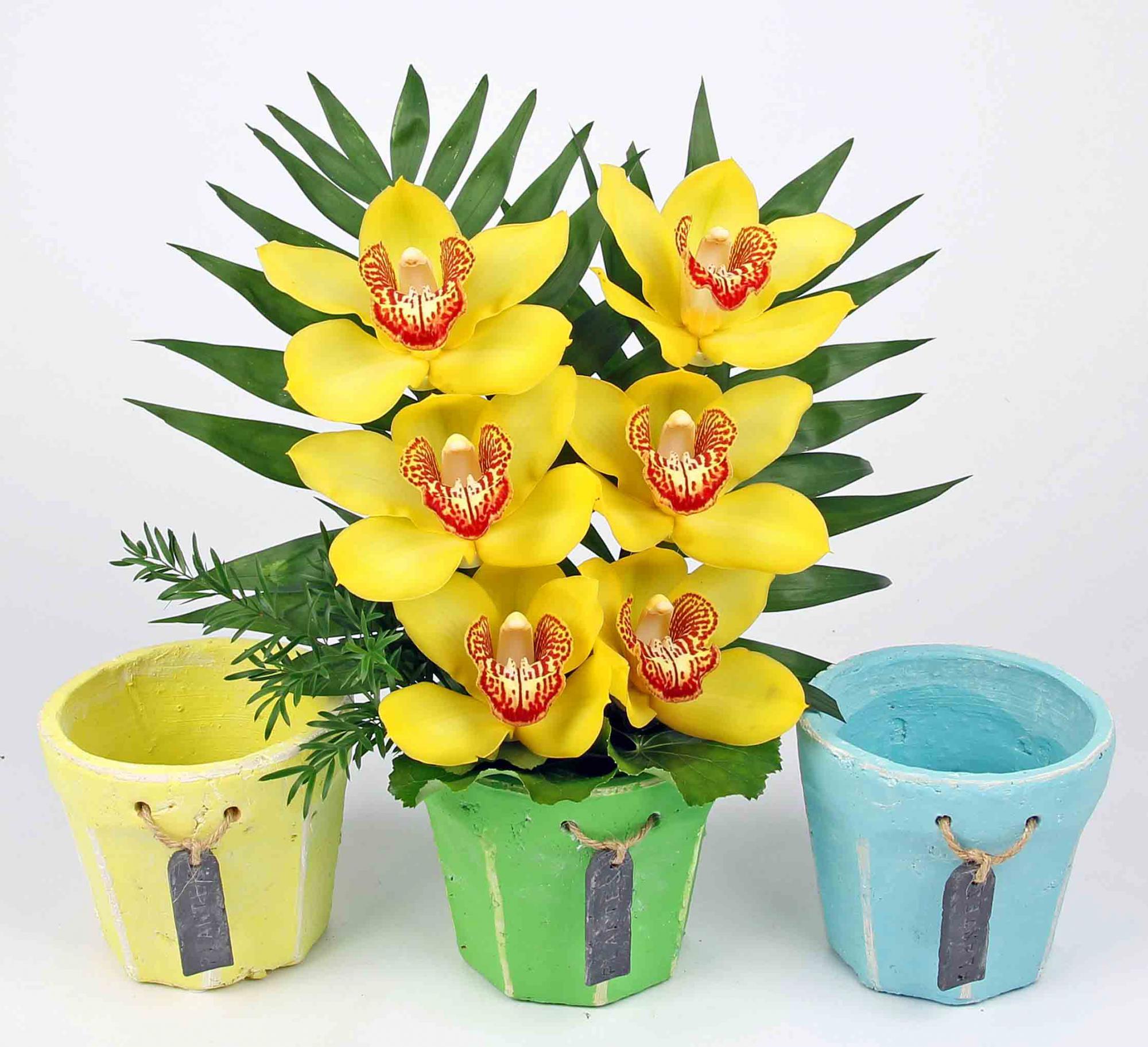 Beton pot pastel met 6 orchideeën