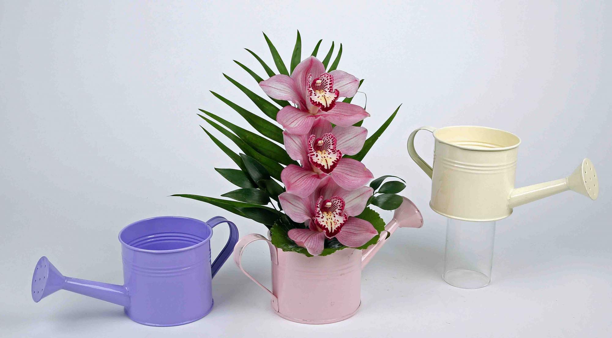 Pastel gieter met 3 orchideeën