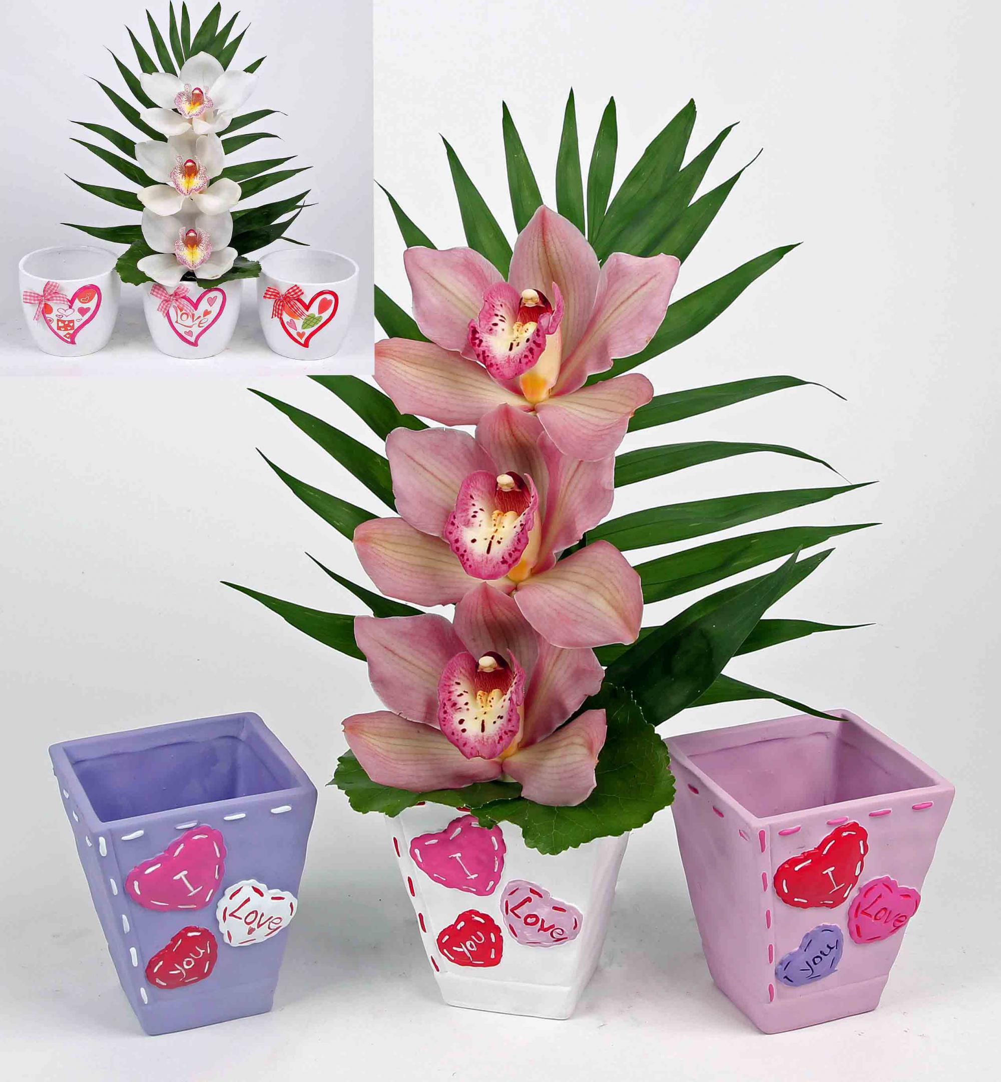 Hartjes pot assorti met 3 orchideeën