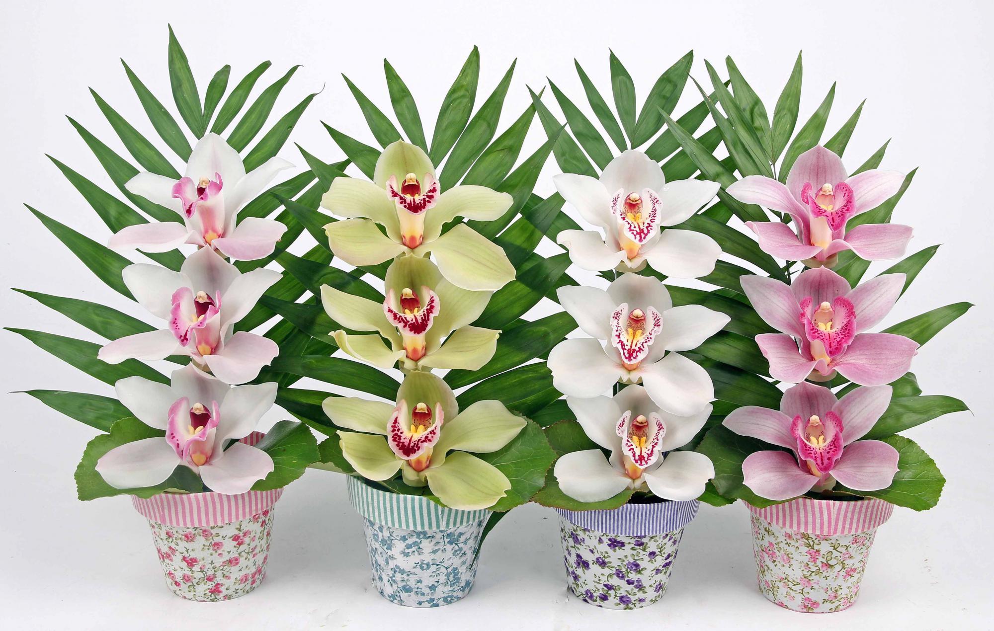 Bloempotje met 3 orchideeën