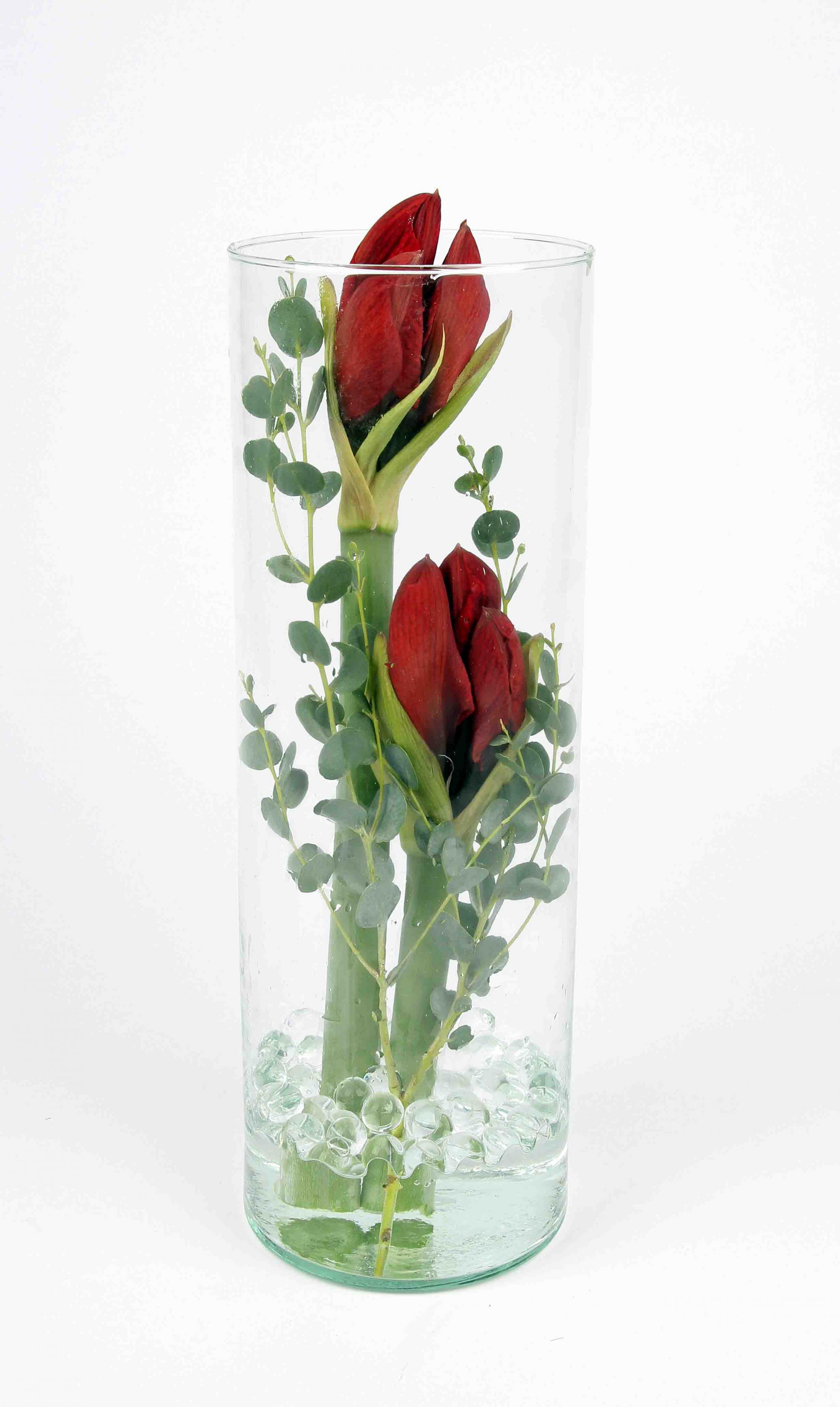 Cilinder glas met amaryliss